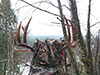 Rocky Mountain Elk Hunt