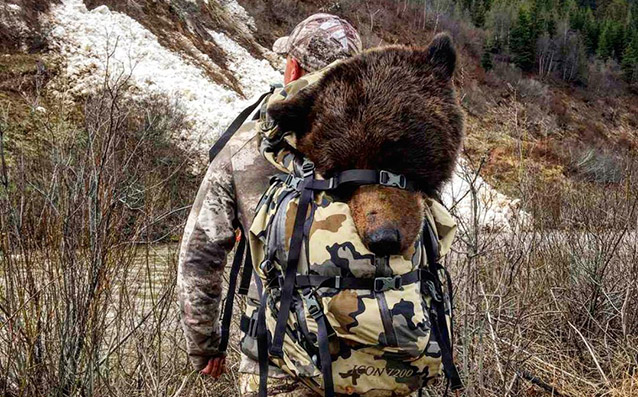Hunting Big Grizzly Bear in BC Canada