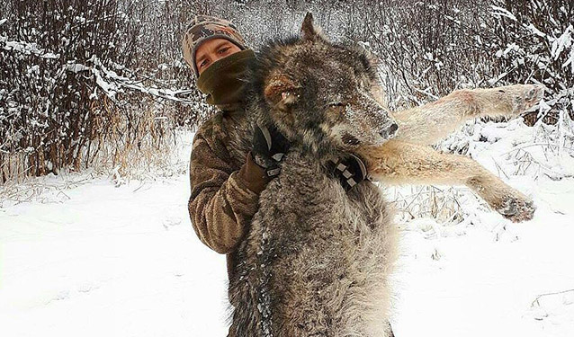 Wolf and Predator Hunts