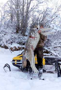 Winter Wolf Hunts
